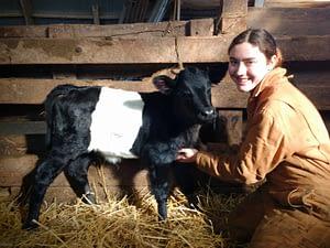 Dutch Belted heifer calf