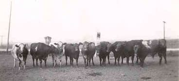 Gma MS herd