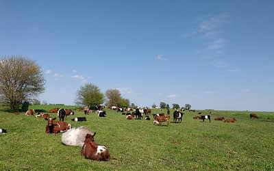 Spring grazing management