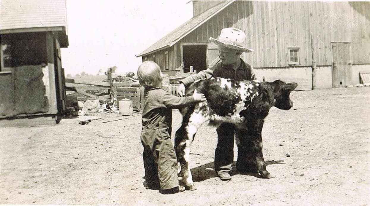 Kenneth Hoffman and his brother Howard with a new dual-purpose Milking Shorthorn calf in 1942.